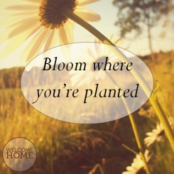 bloom-Facebook-WH